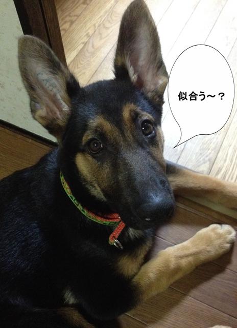 編集_1.jpg
